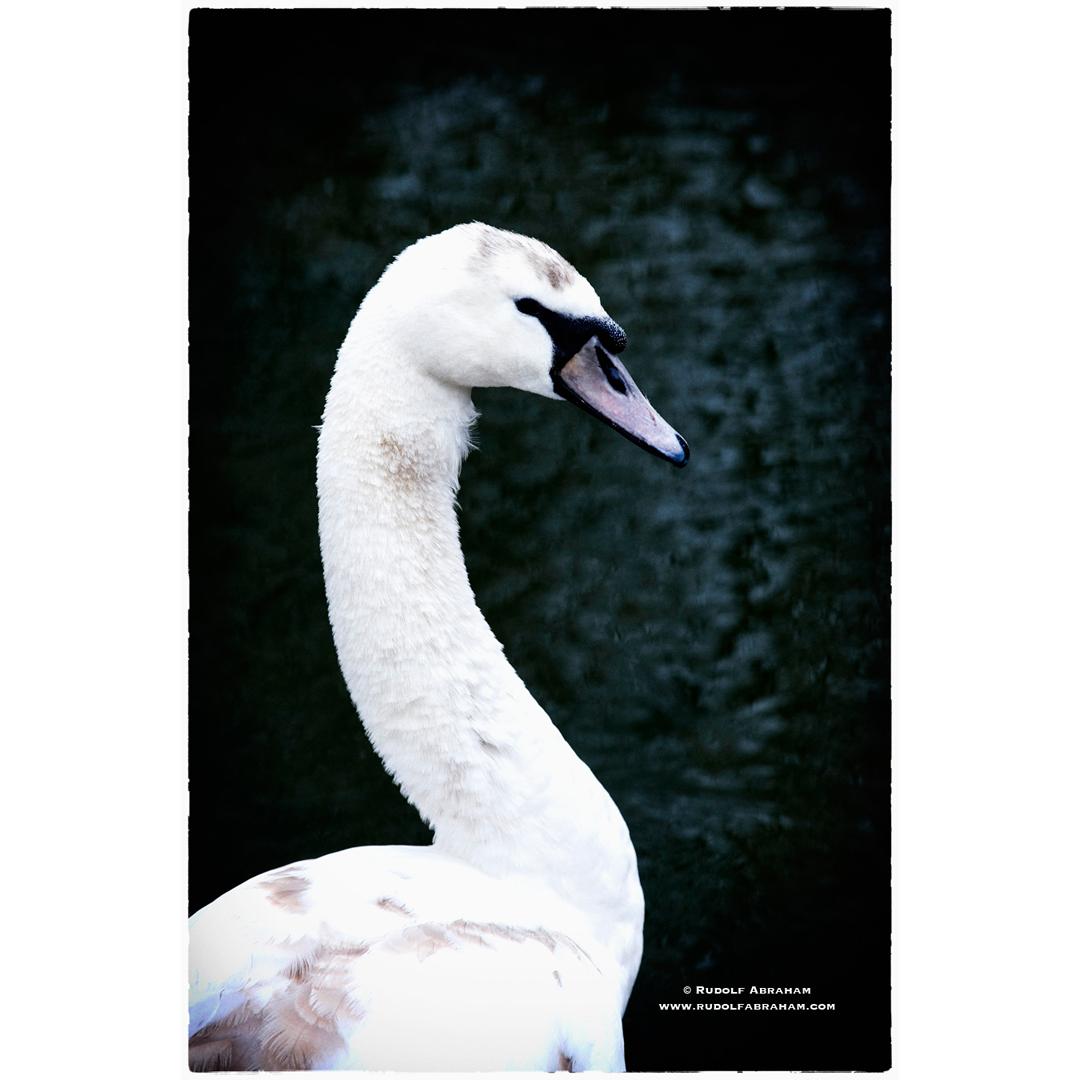 walthamstow-wetlands-london-nature-photography-rudolf-abraham